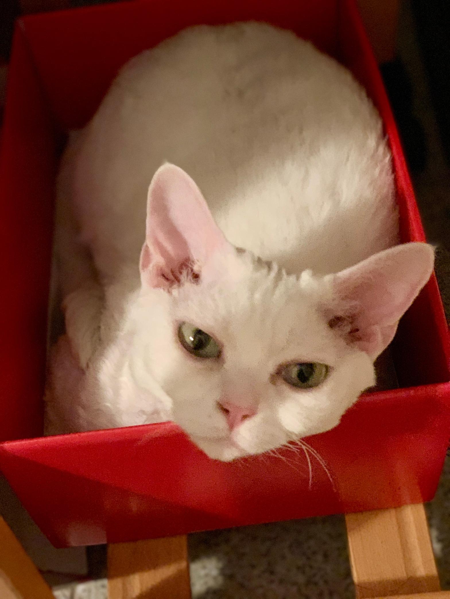 Byron nella scatola rossa